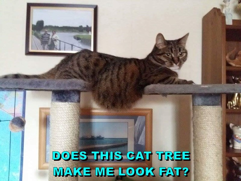 DOES THIS CAT TREE                                                           MAKE ME LOOK FAT?