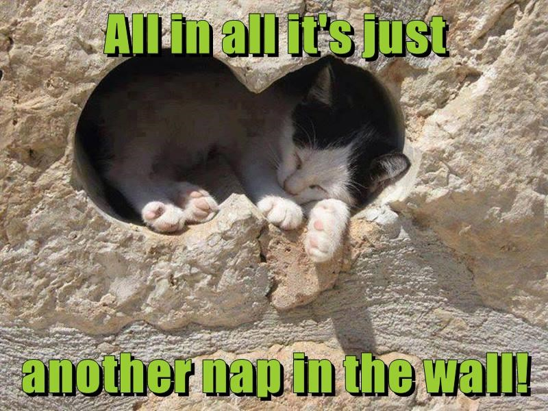animals nap another kitten just caption wall