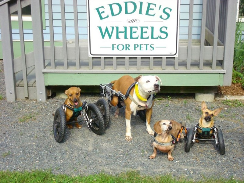 eddies wheels for pets