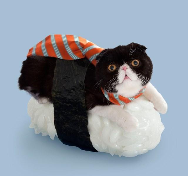 suchi costume - Cat