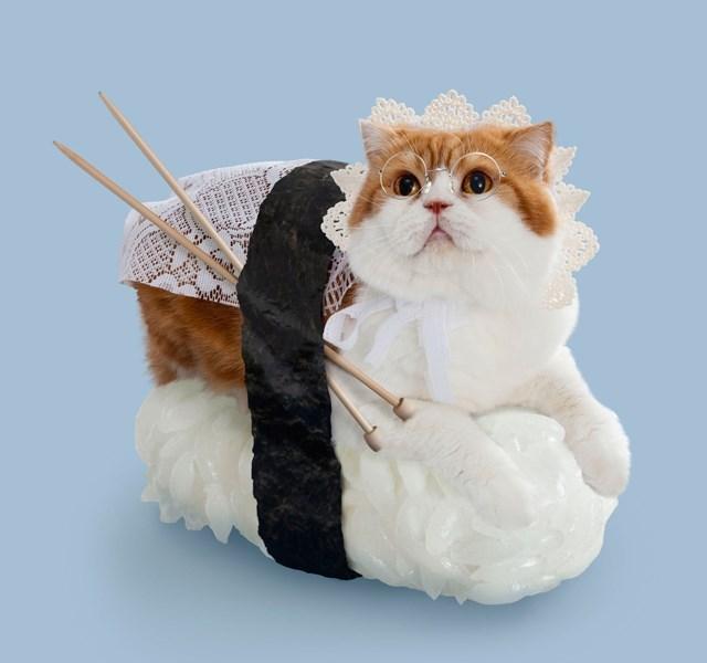 suchi costume - Cat - etada