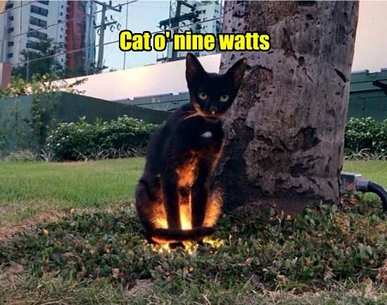 cat nine watts caption - 8812870400