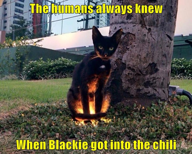 The humans always knew  When Blackie got into the chili