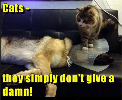 animals cat dogs damn simply dont caption give - 8812988672