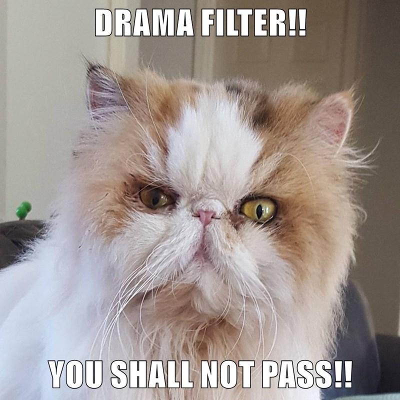 DRAMA FILTER!!  YOU SHALL NOT PASS!!