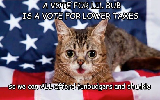 chunkles lil bub cat vote taxes caption tunbudgers lower - 8813082880
