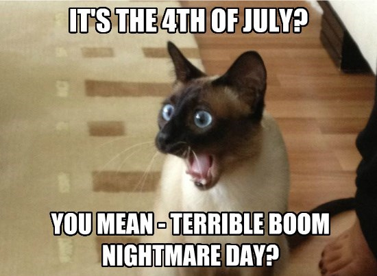 terrible cat 4th of july nightmare boom day caption - 8813119488