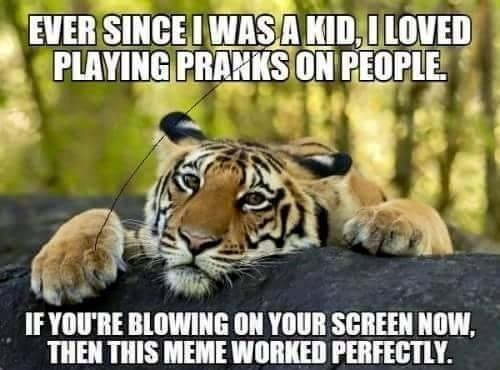 image Memes prank tiger - 8813256192