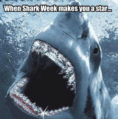 When Shark Week makes you a star...