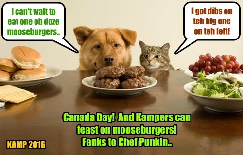 I can't wait to eat one ob doze mooseburgers.. I got dibs on teh big one on teh left! KAMP 2016 Canada Day! And Kampers can feast on mooseburgers! Fanks to Chef Punkin..