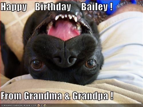 happy birthday meme with a cute dog saying happy birthday bailey from grandma and grandpa