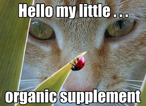 hello,cat,supplement,caption,organic,little
