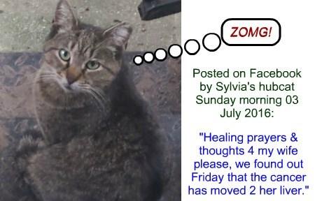 healing,cat,prayers,posted,hubat,facebook,caption,sylviag