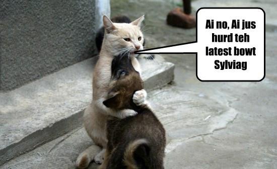 cat about heard caption sylviag - 8815599104