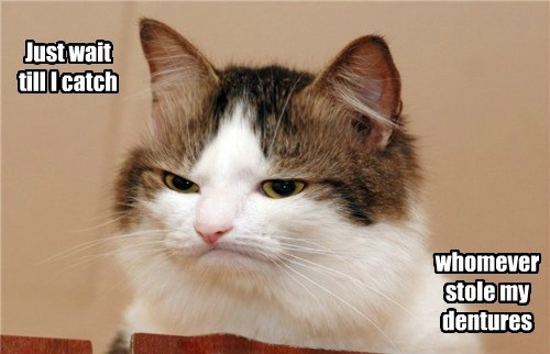 dentures wait cat catch whomever stole caption - 8815621632