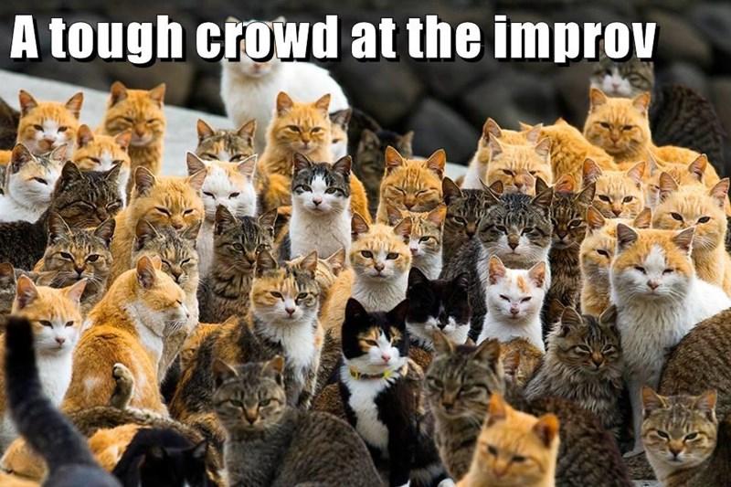 animals improv cat tough caption crowd - 8815752448