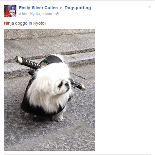 ninja dogs failbook facebook - 8816212224