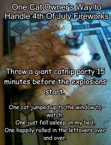 One Cat Owner's Way to Handle 4th Of July Fireworks