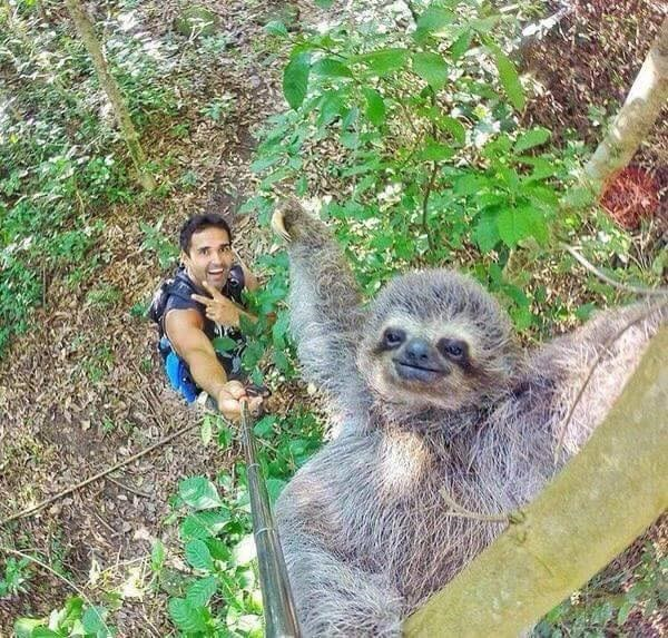 a selfie stick was finally used for something great this sloth selfie