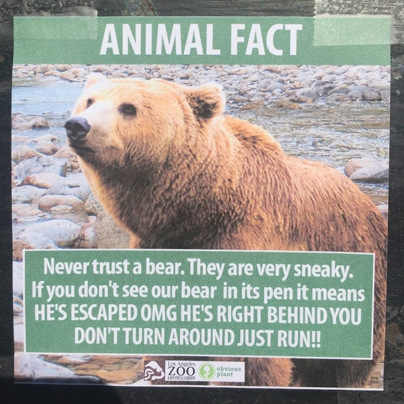 Mammal - ANIMAL FACT Never trust a bear. They are very sneaky. If you don't see our bear in its pen it means HE'S ESCAPED OMG HE'S RIGHT BEHIND YOU DON'T TURN AROUND JUST RUN!! Los Angeles ZOO obvious plant &BOTANICAL GARDENS