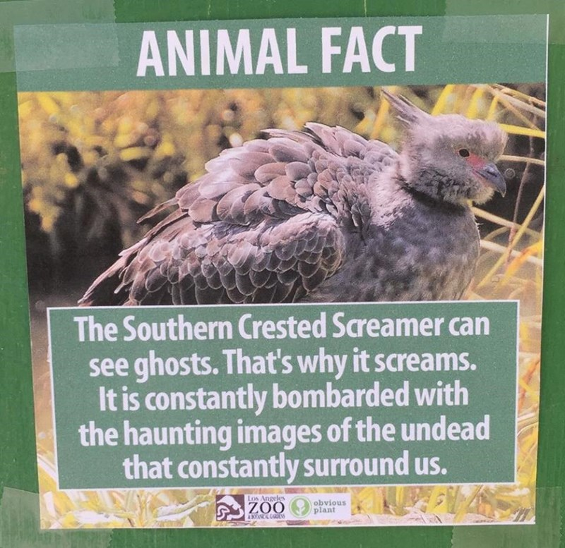 Bird - ANIMAL FACT The Southern Crested Screamer can see ghosts. That's why it screams. It is constantly bombarded with the haunting images of the undead that constantly surround us. Los Angeles obvious plant ZOO A SOANICAL GES