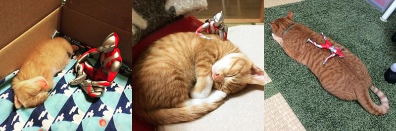 kitten grew up under the watchful eye of ultraman