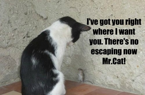 you cat escaping caption no got - 8816651776
