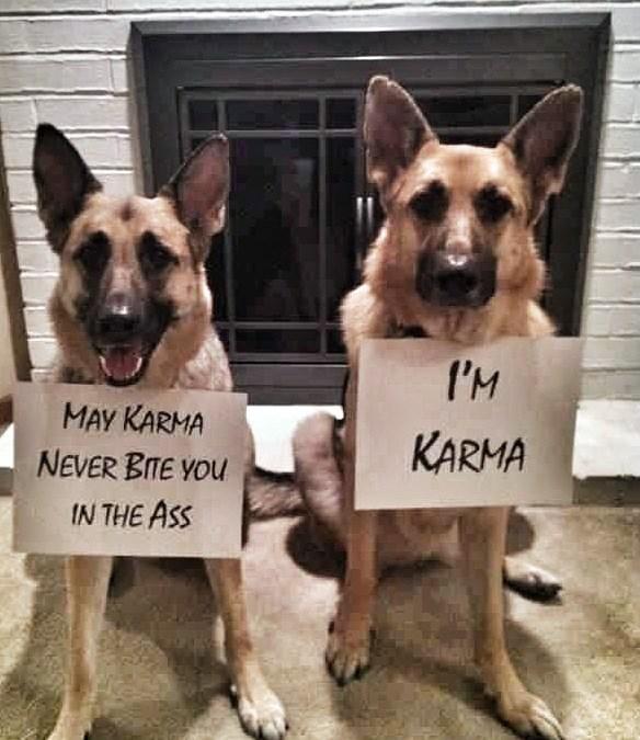 dogs karma - 8817653504