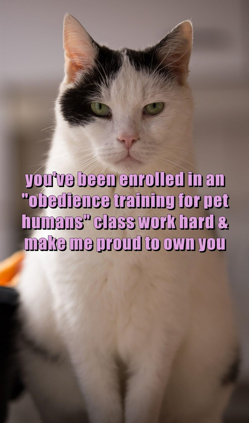 "you've been enrolled in an ""obedience training for pet humans"" class work hard & make me proud to own you"