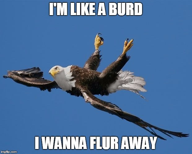 eagle birds meme caption - 8818107392