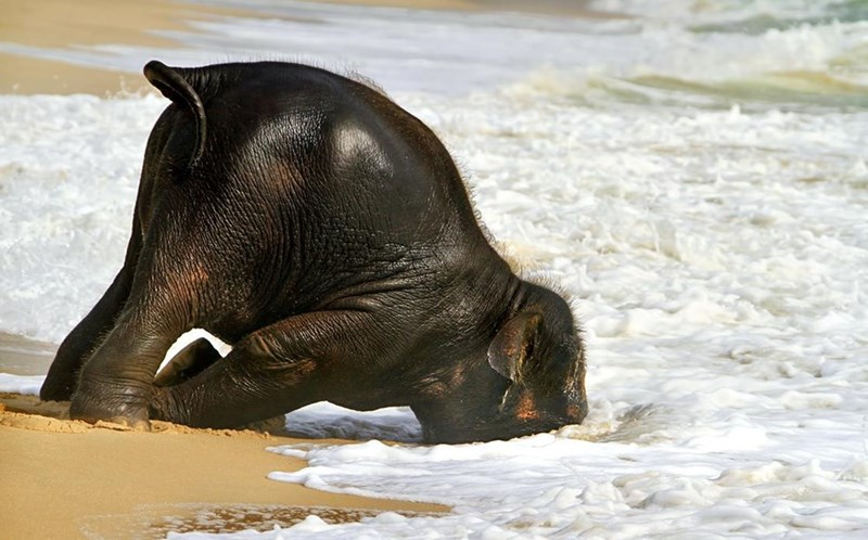 baby elephant sees the sea first time daily squee cute animals