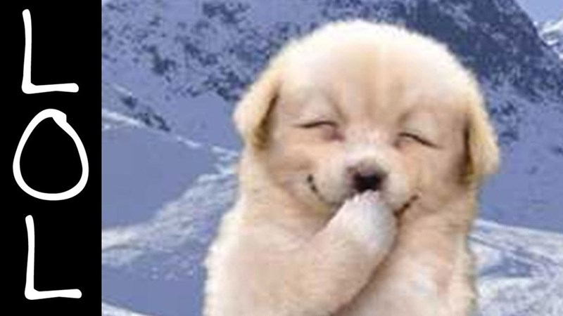 White fluffy dog is laughing out loud with LOL caption off the the side.
