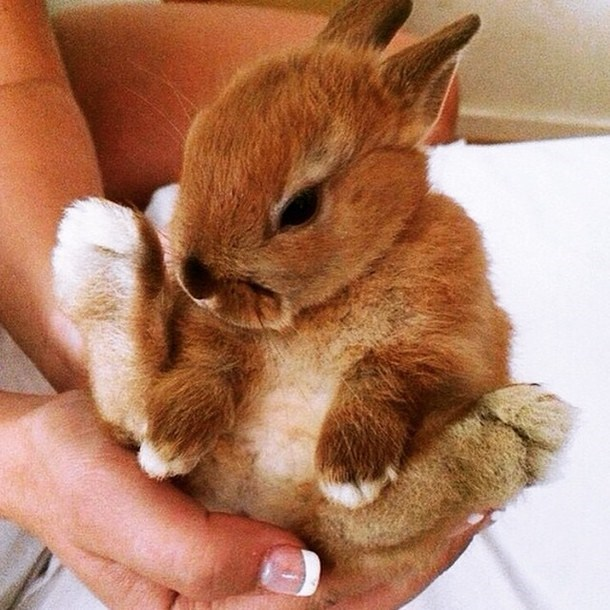 Pic of a very cute baby bunny rabbit that has just been born.