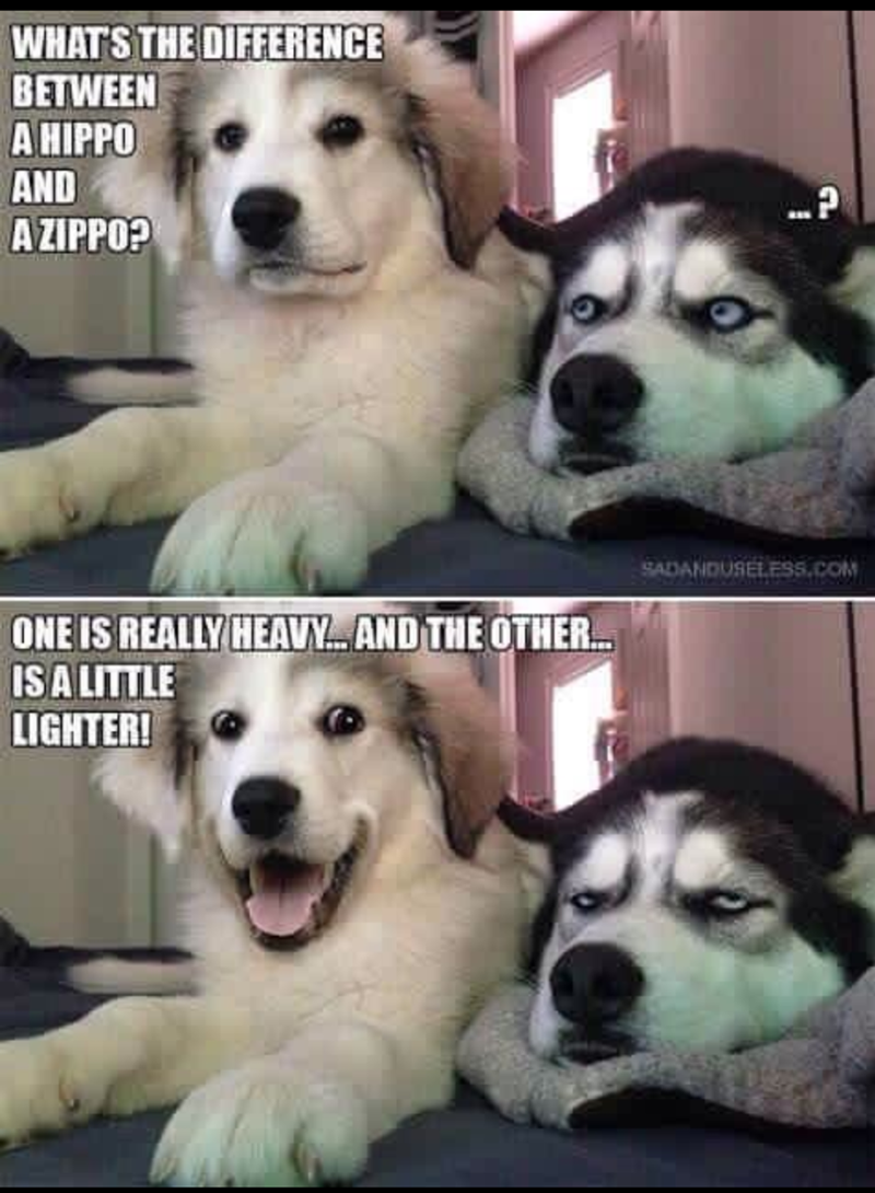 Pun dogs always make my day. Hope it lightens your mood too