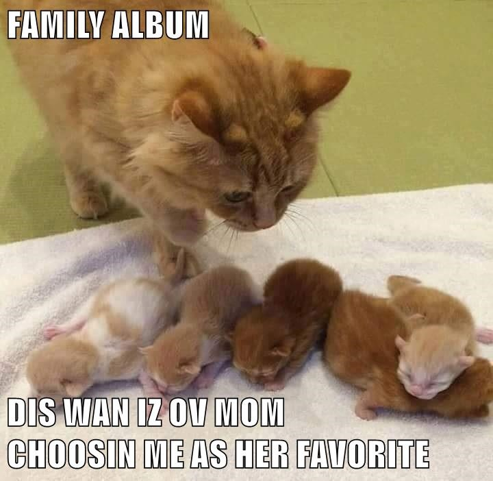 cat,me,choosing,album,favorite,family,caption,mom