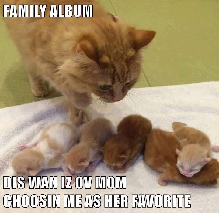 animals cat me choosing album favorite family caption mom - 8818587392