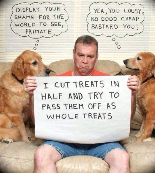 dogs human shame - 8818621440