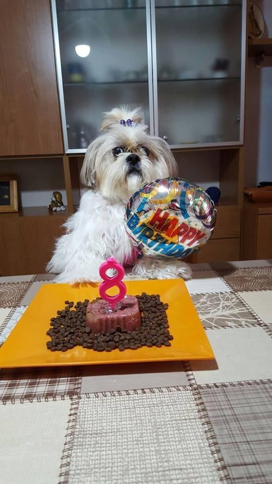 dogs birthday - 8818634496