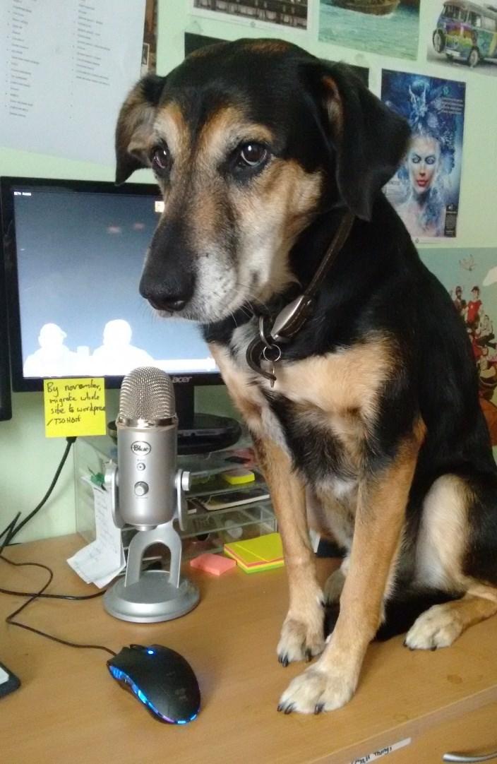 dogs,desk