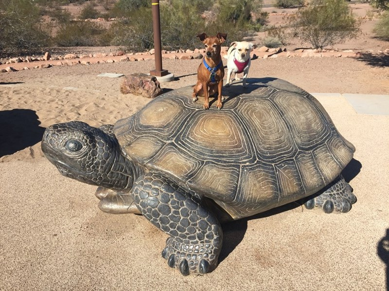 dogs,turtle