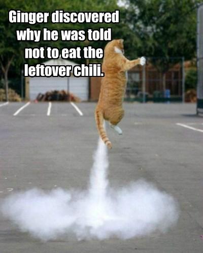 ginger cat chili eat discovered not caption leftover - 8818675712