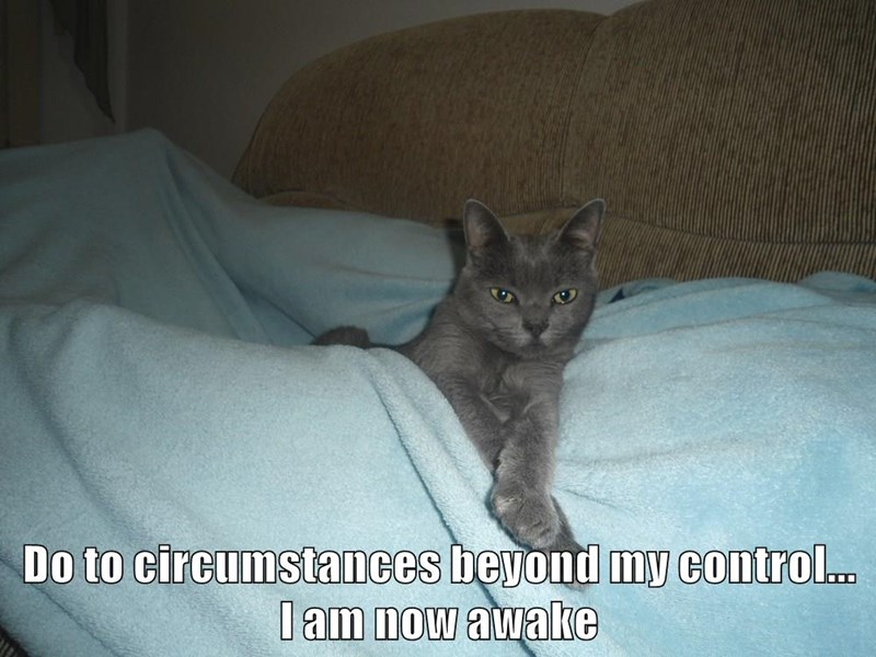 animals cat circumstances beyond control caption awake due