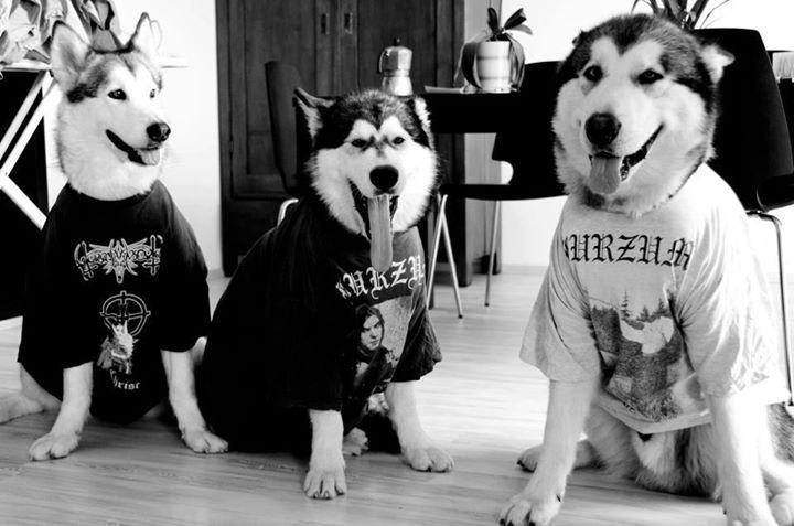 metal dogs husky shirts - 8818679040