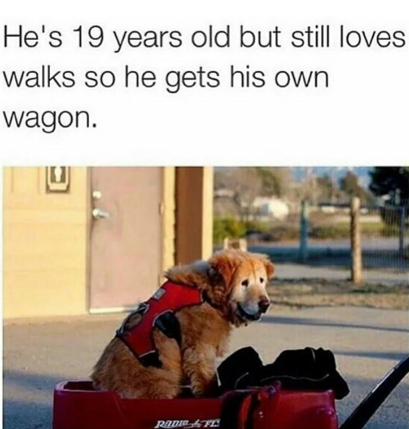wagon old dogs - 8818679296