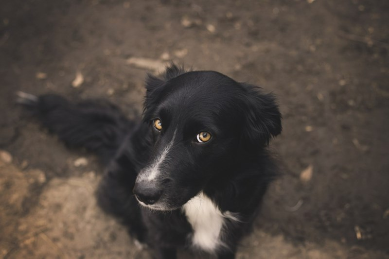 dogs - 8818709504