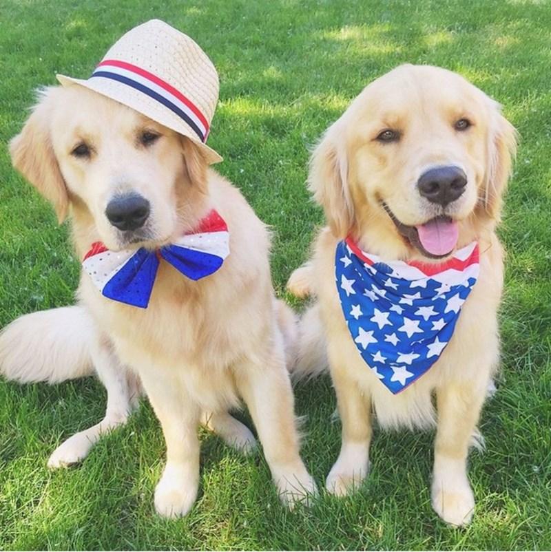 dogs america - 8818714880