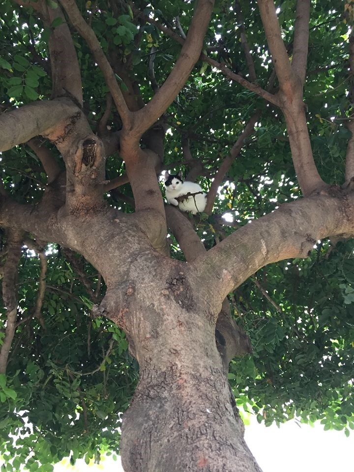 cute cat image cat in tree with tiny twig machine gun