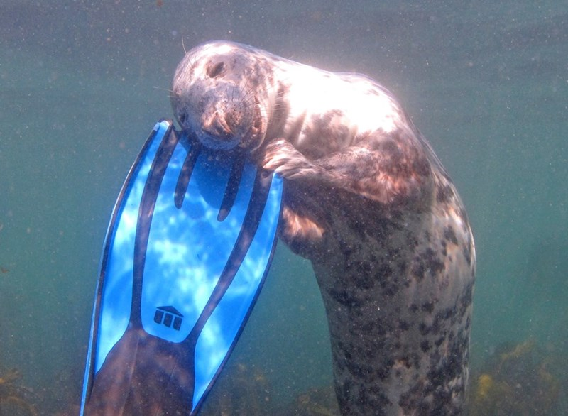 cute animal photo seal and swimmer