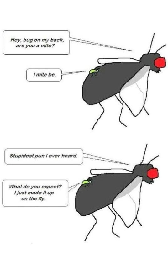 bugs puns web comics - 8818758144