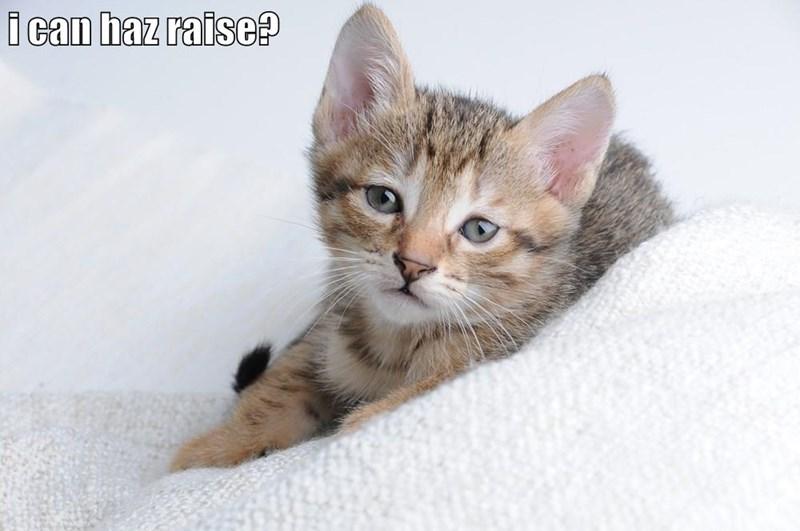animals - 8818764544